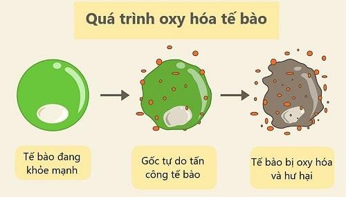 tác dụng chống oxy hóa của nụ đinh hương
