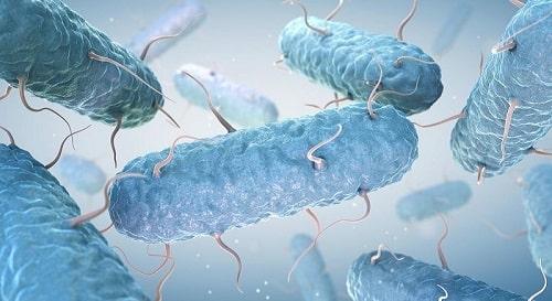 tác dụng của đinh huowgn trong diệt khuẩn