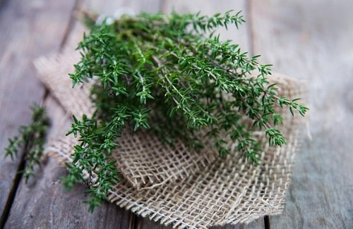 ứng dụng của cỏ xạ hương