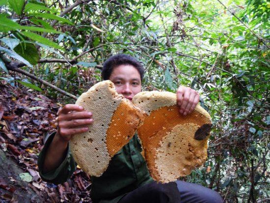 Mật ong rừng tây bắc mua ở đâu tại Hà Nội