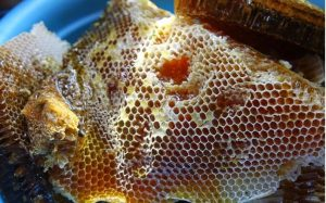 mat ong rung nguyen chat
