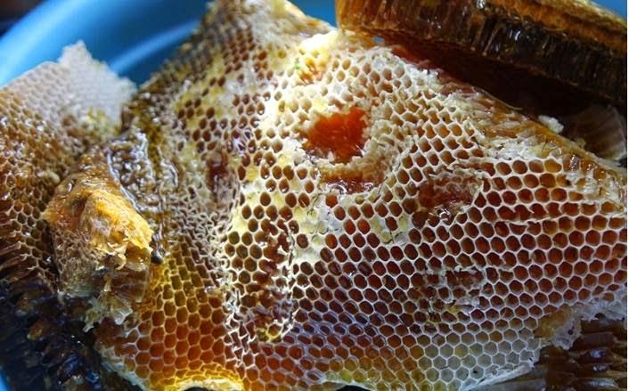 Hàm lượng các chất có trong mật ong rừng