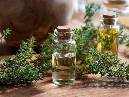 Thành phần hóa học trong tinh dầu cỏ xạ hương