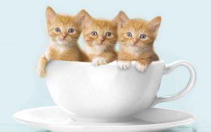 khay vệ sinh cho mèo